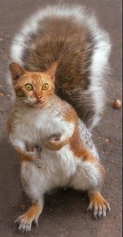 cat-squirrel.jpg