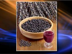 Acai Berry: Panacea or Scam? EN Uncovers the Mysteries of ...